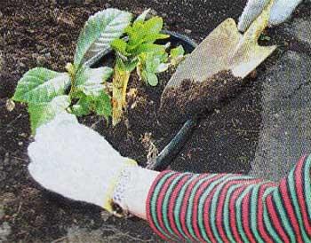 和のガーデニング盆栽の植え込み