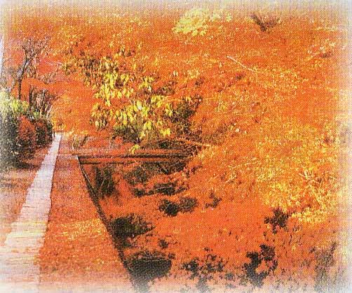 京都の哲学の道