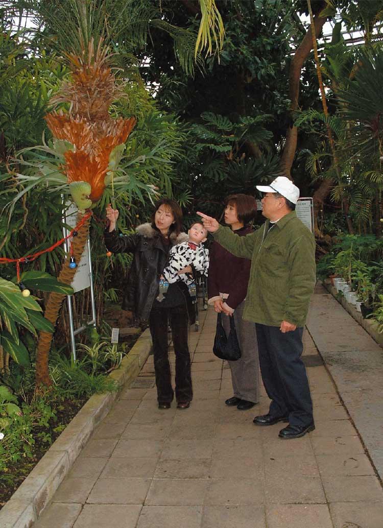 植物園にある沢山の熱帯植物