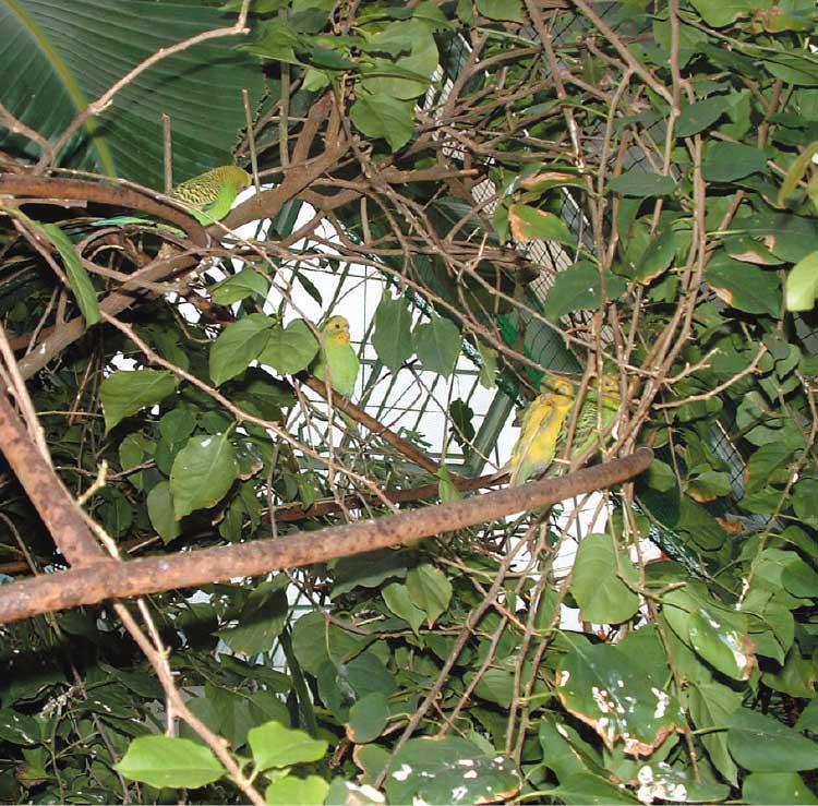 熱帯植物園にいるインコ