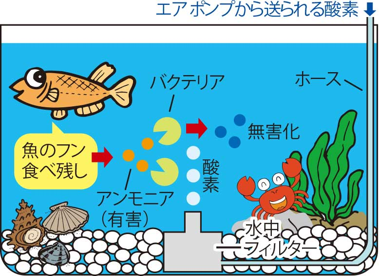 水槽内の食物連鎖解説図