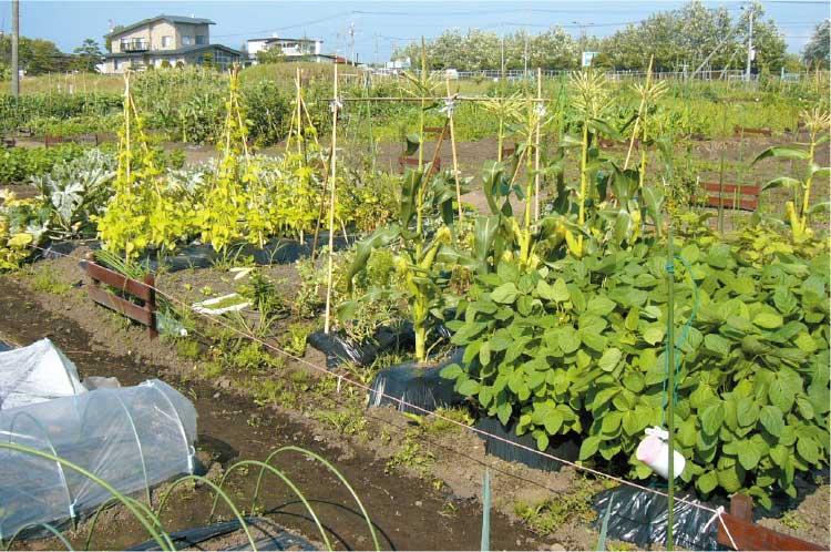 函館空港ふれあい菜園