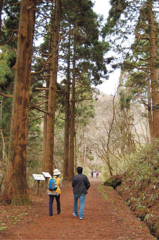 函館山の登山道