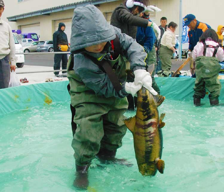 やくも大漁秋味まつりの鮭のつかみ取り