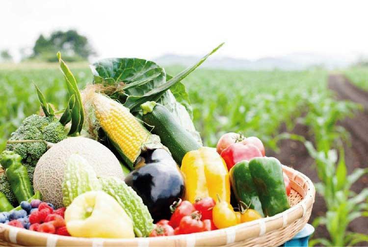 谷観光農場のとれたての野菜