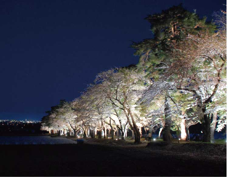 北斗桜回廊の夜桜