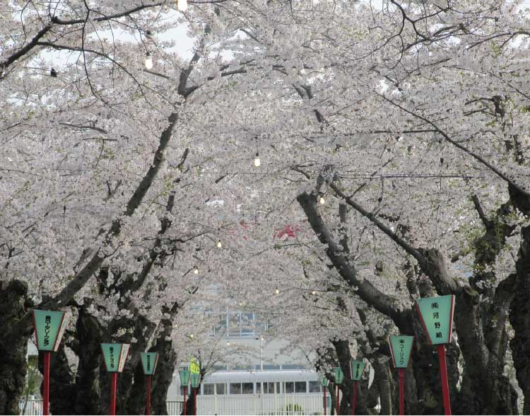 もりまち桜まつ