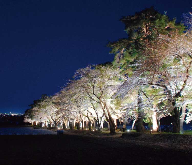 松前藩戸切地陣屋跡のライトアップされた桜のトンネル