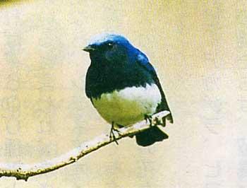 函館山の鳥