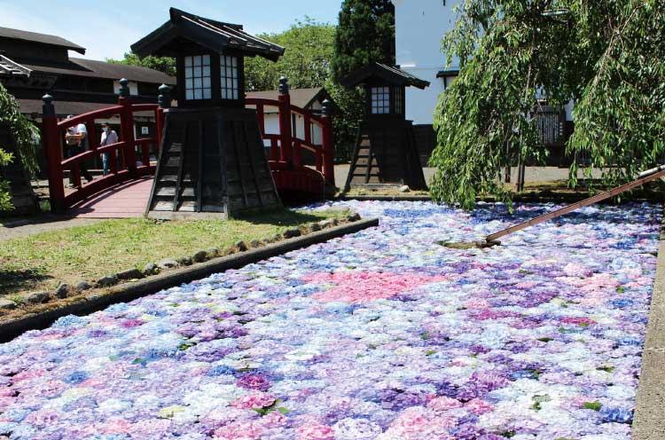 松前城の浮き紫陽花