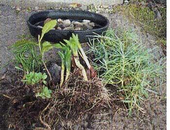 和のガーデニング盆栽に必要なもの