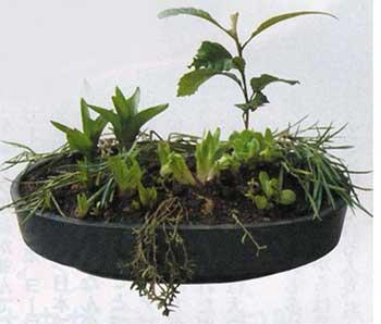 完成した和のガーデニング盆栽