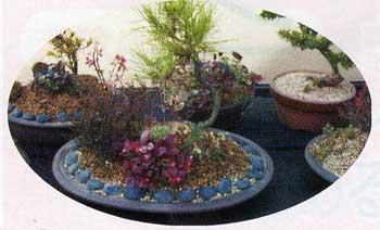 川島さん宅の色々な盆栽