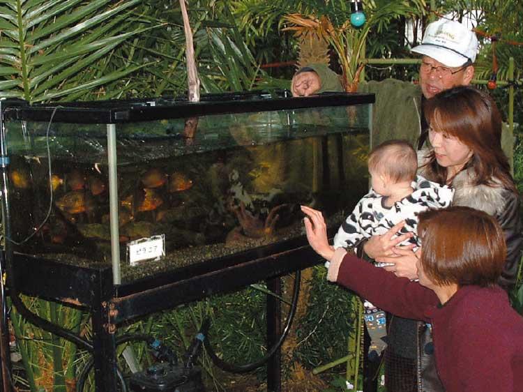 熱帯植物園にあるピラニアの水槽