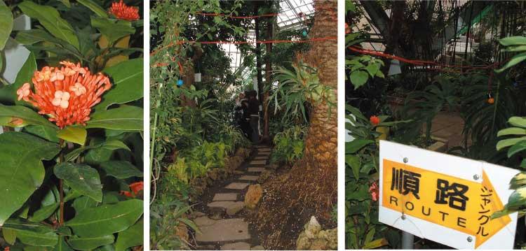 熱帯植物園のジャングル順路