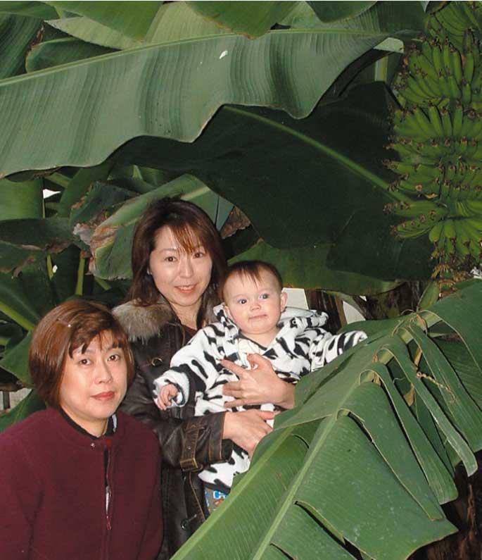 バナナの大きな木の下で記念撮影している親子