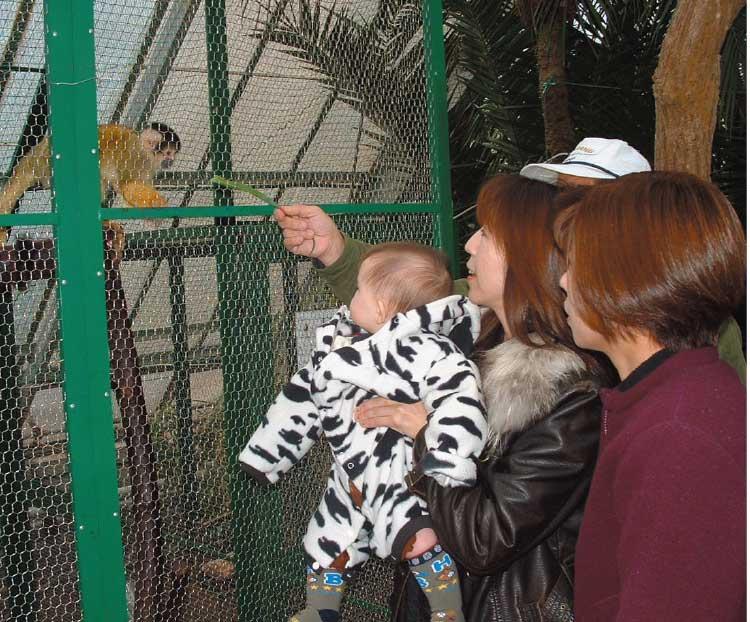 熱帯植物園にいる猿