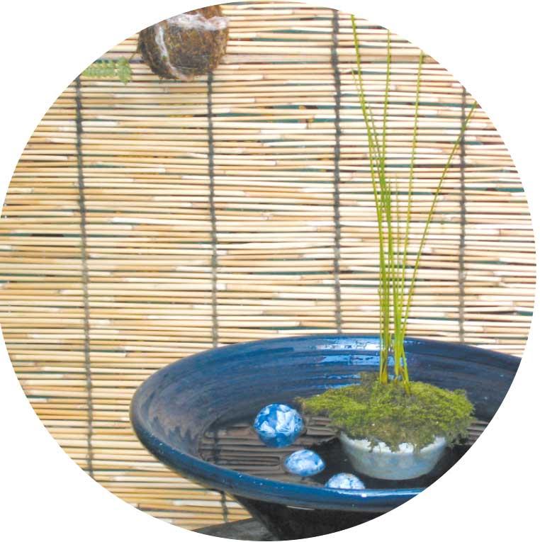 水を張った陶器の中に置かれた鉢植え