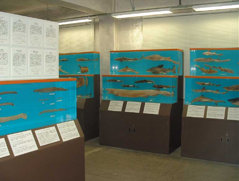 北海道大学水産学部水産資料館