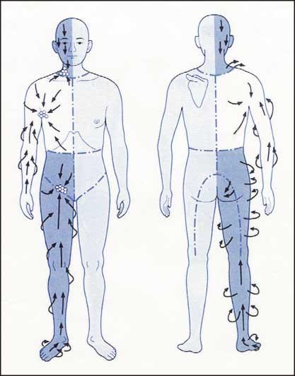 人体のリンパの流れ図