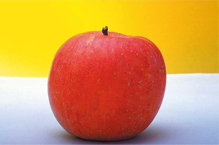 山内昭一果樹園のリンゴ