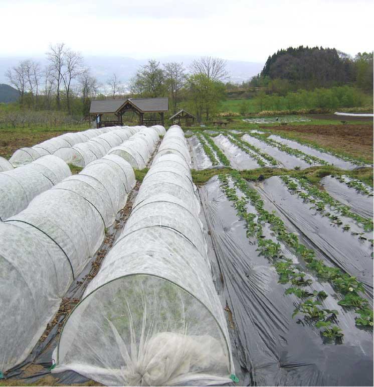 ゆうひの館イチゴ農園