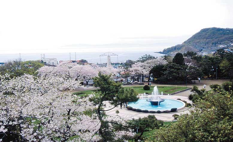 桜が満開の函館公園