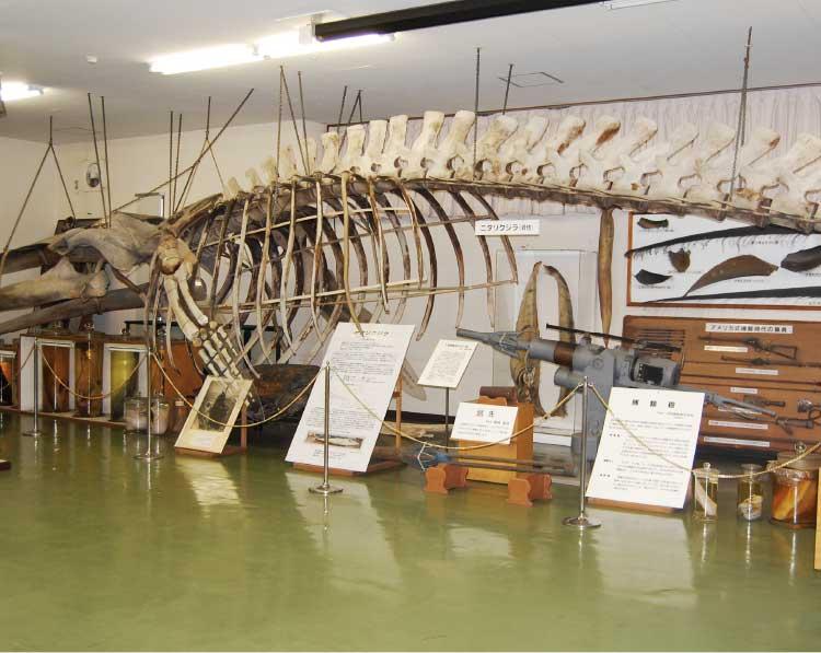 北大総合博物館分館水産科学館にあるニタリクジラの完全骨格標本