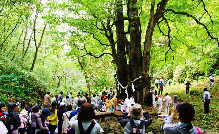 乙部町の緑桂森林フェスティバル