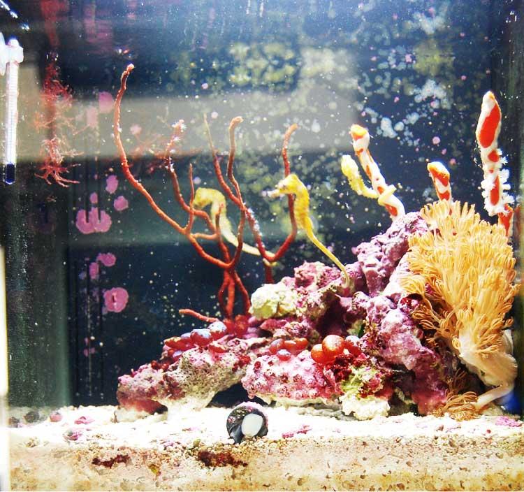 マリンエンゼルの海水アクアリウム