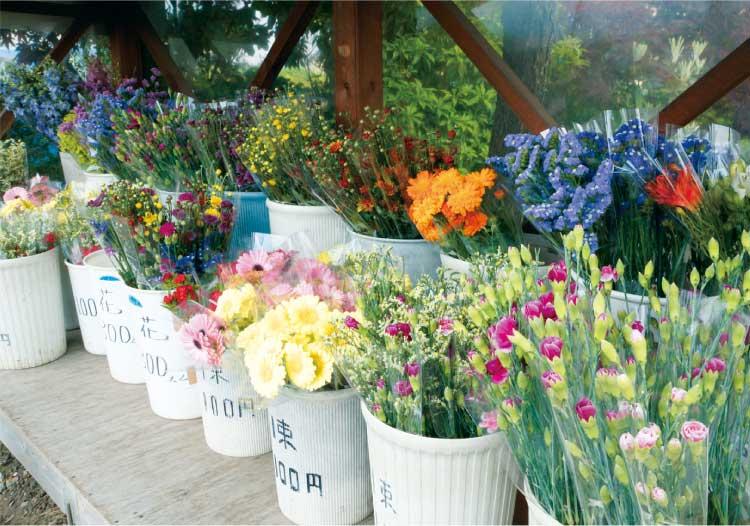 ミッチーの鉢植えの花